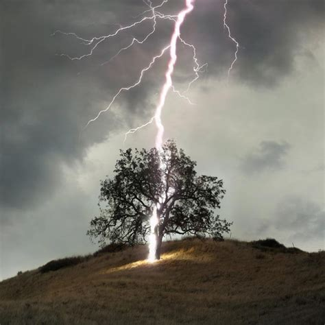 lighting trees why does india lose 2 000 to lightning every year