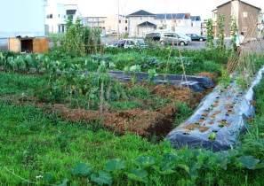 garden backyard ideas backyard garden ideas vegetables outdoor furniture