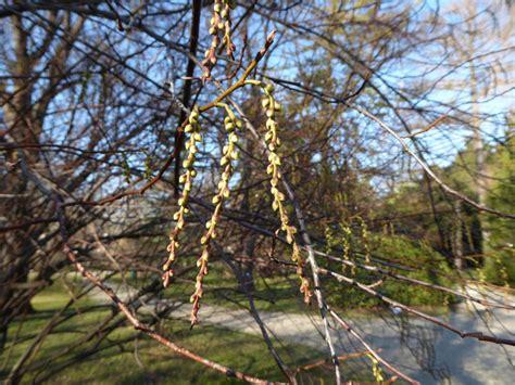 Der Garten Wien 2 by Botanische Spaziergaenge At Thema Anzeigen 13 02 2016