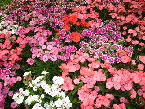 gardens with flowers beautyful flowers flowers garden wallpapers