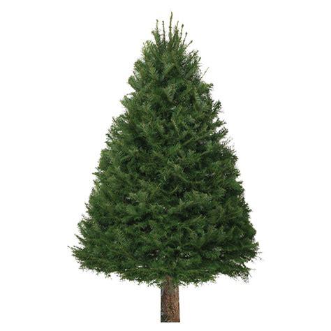 rona tree tree 6 to 8 rona