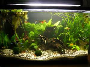aquarium eau douce debutant