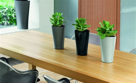 plants for the office commercial plant installation beneva plantscapes