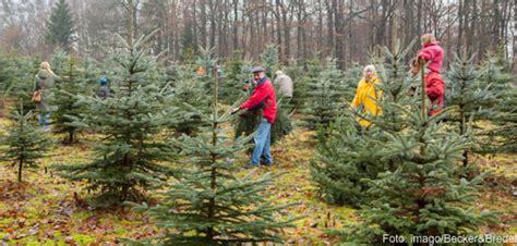 weihnachtsbaum selber schlagen schwarzwald suche tannenbaum eufaulalakehomes
