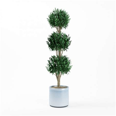 potted topiary plants top 28 potted topiary plants artificial potted pot