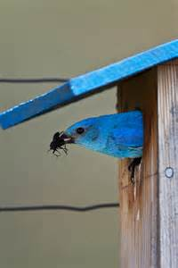one board woodworking projects pdf diy bluebird house plans from one board pdf easy