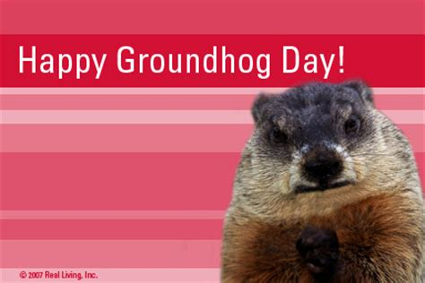 groundhog day used to something corvette forum rpi designs happy groundhog day sale