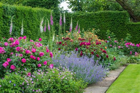garden flower borders roses in mixed borders gallery