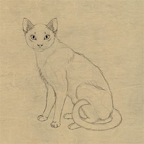 cat easy simple cat drawing exles anyone can try photofun4ucom