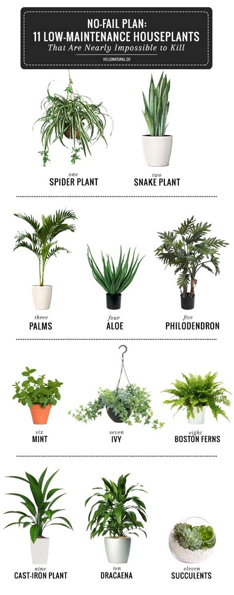 inside house plants best 25 plants ideas on plants indoor cacti