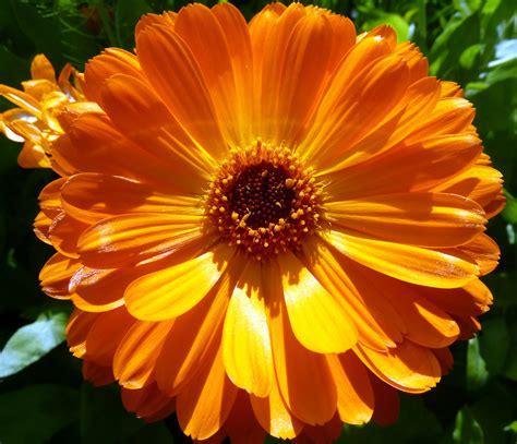 flower images file orange flower 7433774546 jpg wikimedia commons
