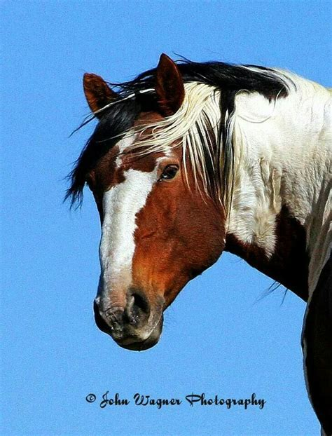 picasso paintings of horses 17 best images about horses on the golden