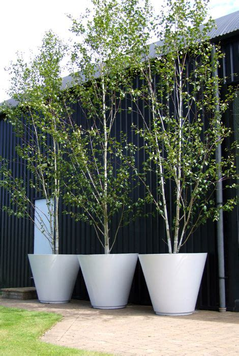 large planters for trees best plants you can grow in containers betula
