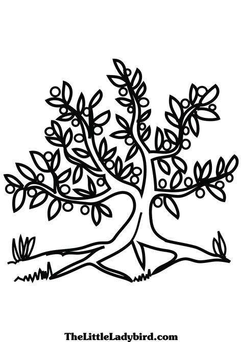 tree colouring in pages free olive tree coloring page thelittleladybird