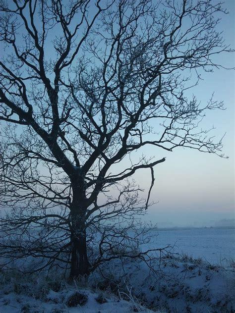 winter trees frozen winter tree by hokota on deviantart