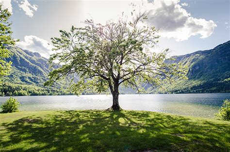 best tree images inspiring proverb the best time to plant a tree