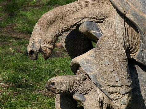 zoo animals zoo animal quotes quotesgram