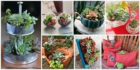 succulent garden ideas 15 fantastic succulent garden ideas for your home