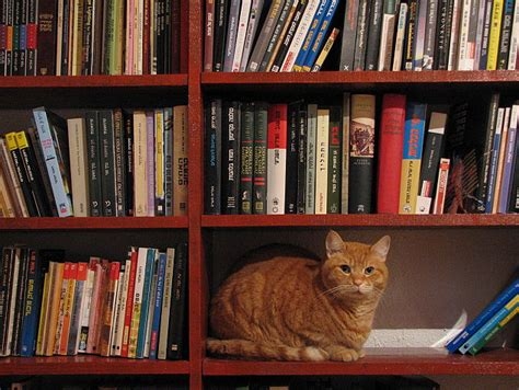 picture books about cats the world s most library cat