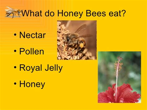 what does do bees