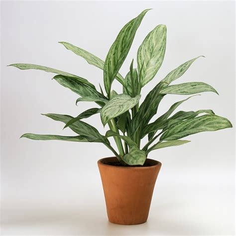 plants that don t need light house plants that don t need a lot of light