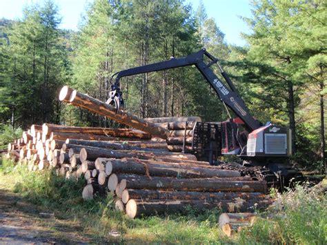 harvesting trees harvesting historic white pine the adirondack almanack