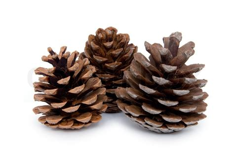 with pine cones pine cones isolated on white background stock photo