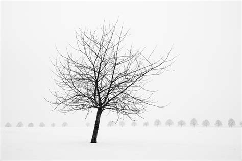 tree in white bare tree in winter wonderful black and white snow