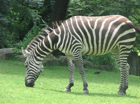 Pics From The Zoo Animals Photo 1674822 Fanpop