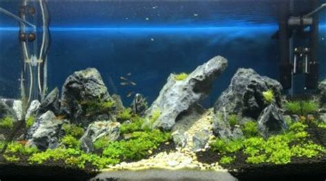 aquarium eau douce ouvert ou ferm 233