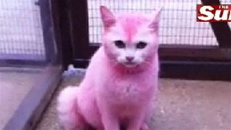 pink cat pink cat images