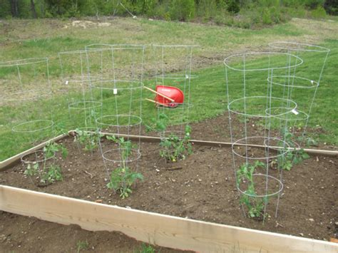 what to plant in raised vegetable garden planting vegetables in a raised bed garden