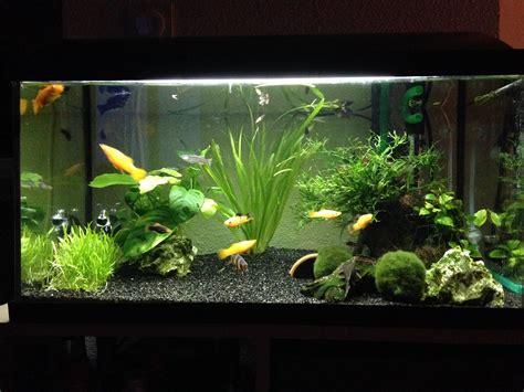 photos d aquarium page 34