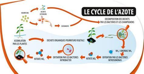 aquarium cycle azote cycle de l azote d 233 finition illustr 233 e cycle de l azote d un