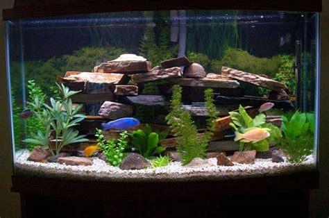 aquarium decoration ideas freshwater how to clean a fish tank aquarium water changes made easy