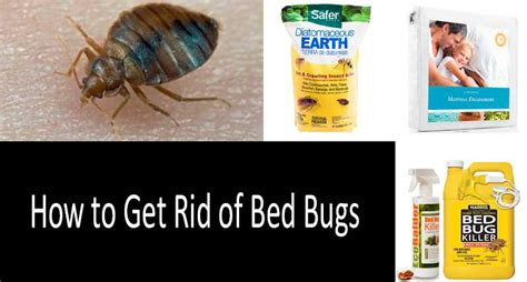 Get Rid Of Bed Bugs Fast by How To Get Rid Of Bed Bugs Fast 8 Best Bed Bug Traps