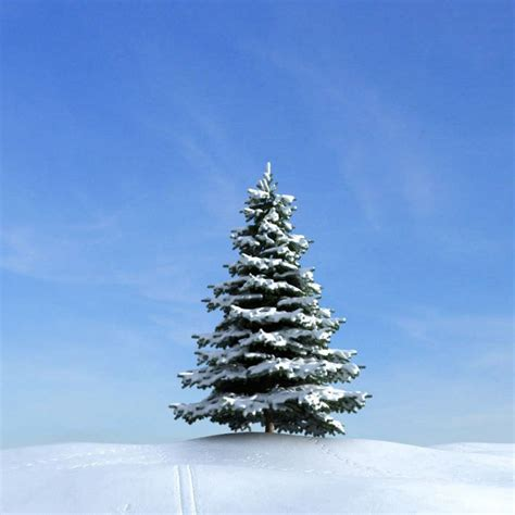 tree with snow snow covered pine tree 3d model cgtrader