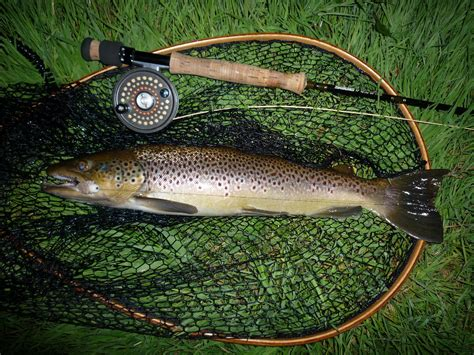 Fishing Sea Trout The Empress Of Fish And The Ultimate For