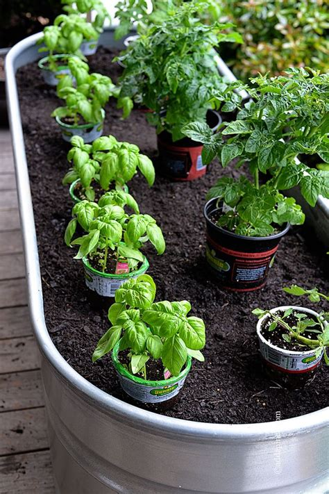 container gardens vegetables container gardening gardens container gardening and