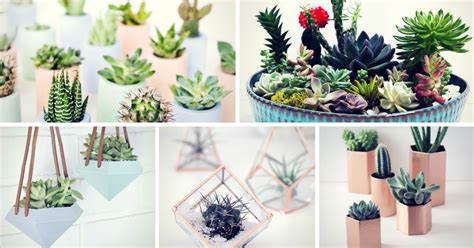 succulent planter ideas 29 diy succulent planter ideas creative ways to display