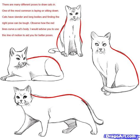 cat step by step how do you draw a warrior cat draw a realistic cat draw
