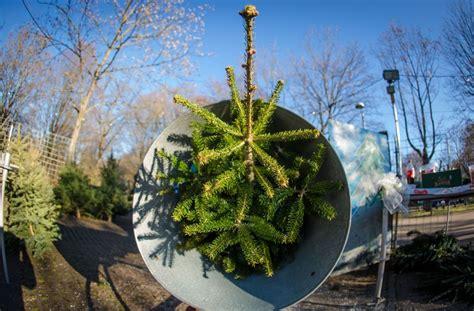 weihnachtsbaum kosten my