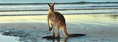 in australia the 10 best australia tours excursions activities 2017