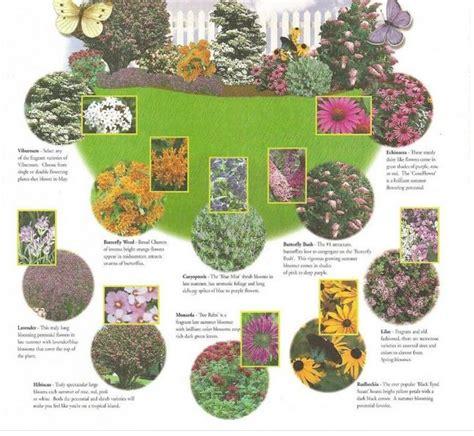 butterfly garden layout butterfly garden zone 5 8 13 varieties 24 plants premier