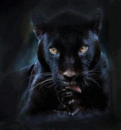 world of reading black panther this is black panther level 1 black panther now how am i supposed to resist pinning