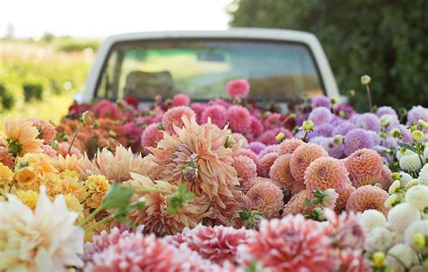 dahlia planting with floret the blog at terrain