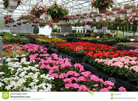 garden flowers for sale colorful flowers for sale in greenhouse stock photo