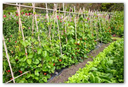 vegetable garden ideas on pinterest vegetable garden