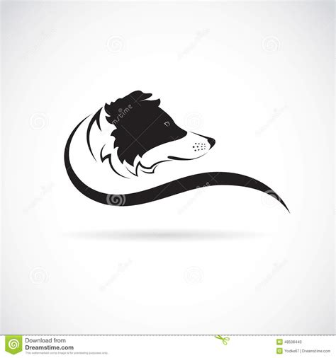 vector image of an border collie dog stock vector image