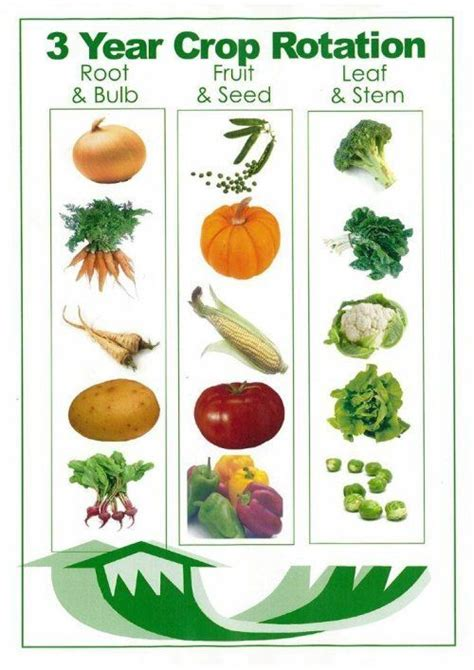 crop rotation home vegetable garden you say potato gardens different types of and vegetables